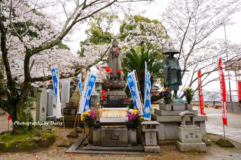 wakayama-sakura-42